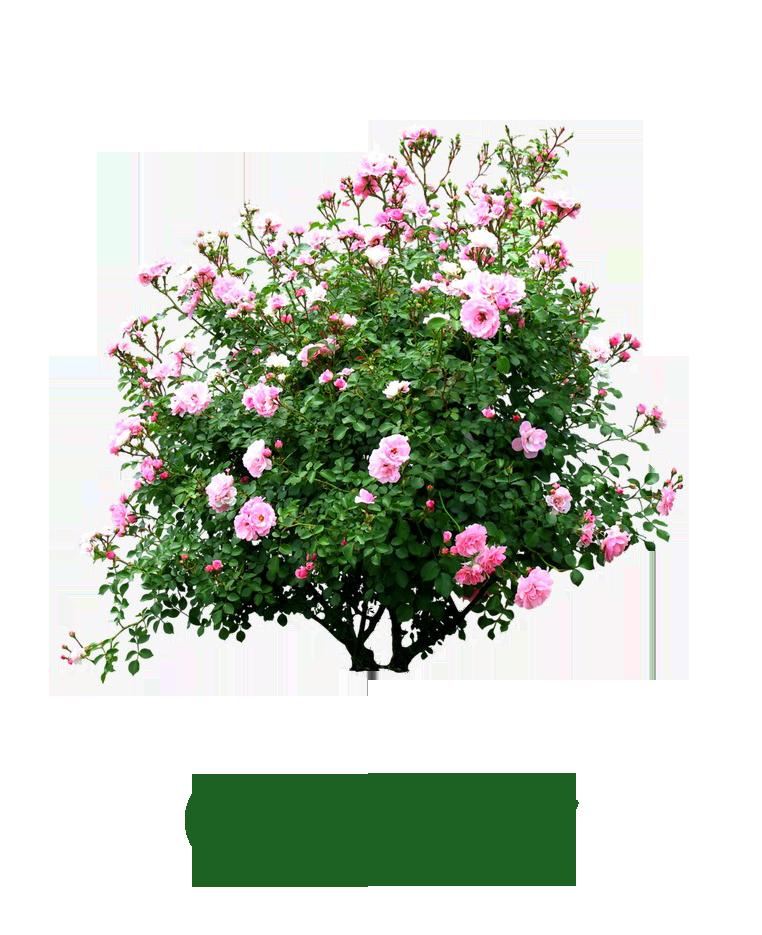 kwiaty_ogrody
