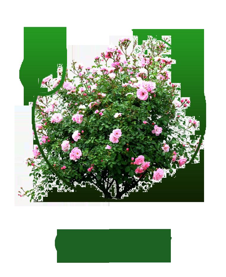 kwiaty_ogrody2